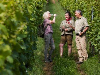 Weinpause im Maintal in Churfranken. Foto: Holger Leue